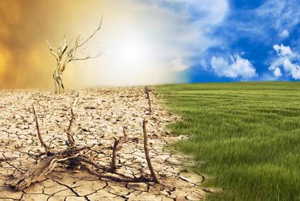 barren-life
