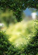 Healing through Love